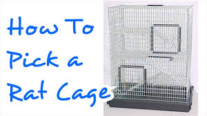 Cheap Rat Cage How To Pick A Rat Cage Rattiepedia Episode 8 Youtube
