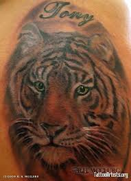 28 best amazing tiger tattoos butterfly images on