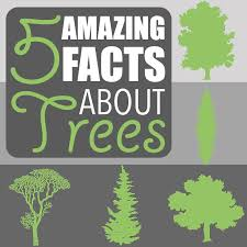 amazing facts about trees 5 amazing facts about trees by of