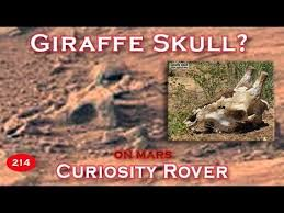 Skull Viewer Giraffe Skull Buried In Sand On Mars Viewer Submission Youtube