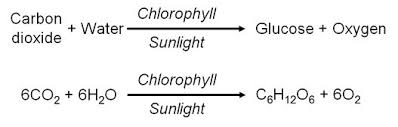is light a form of energy why is sunlight needed for photosynthesis quora