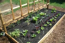 Garden Setup Ideas Basic Garden Set Up Theragardens