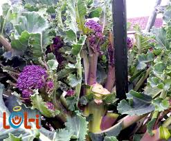 Tips For Planting A Vegetable Garden by Planting A Vegetable Garden Blog