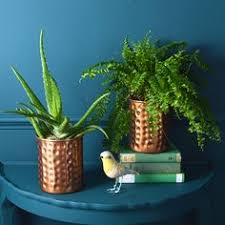 hammered plant pots copper and gold hammered copper plants and