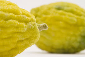 etrog for sale absolute citron mimi sheraton s guide to the lemony fruit that