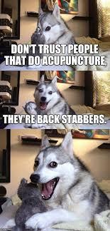 Acupuncture Meme - bad pun dog meme imgflip