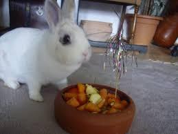 rabbit birthday birthday rabbit by hirotaka712 on deviantart