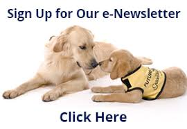 Sponsor A Puppy For The Blind Guide Dog Foundation Home