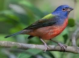 Audubon Backyard Bird Count by Join The Great Backyard Bird Count Slow Family