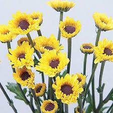 Yellow Pom Pom Flowers - bright yellow novelty viking pom flower farm fresh exports