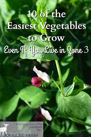 10 Vegetables U0026 Herbs You by 10 Of The Easiest Vegetables To Grow Even If You Live In Zone 3