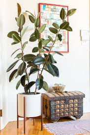 366 best house plants images on pinterest house plants house