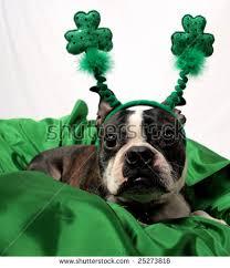 free st patrick u0027s day dog photos page 5 9 avopix com