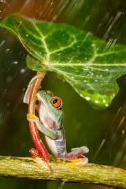 38 best frog u0027s images on pinterest frogs pac man and amphibians