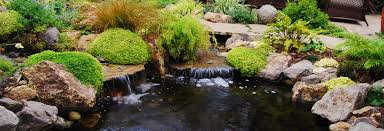 Pictures Of Backyard Waterfalls by La U0027s Best Koi Pond And Fish Pond Builder Sierra Pacific Design