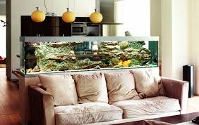 Aquarium Decor Ideas Aquarium Decoration Ideas U0026 Themes