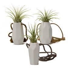 shop house plants at lowes com