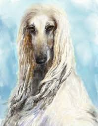 afghan hound speed creme afghanhound artrage by alartstudio deviantart com on