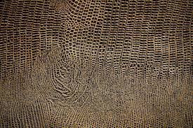 images of snake skin wallpapers group sc