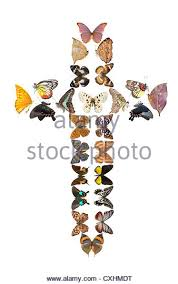 holy cross bug stock photos holy cross bug stock images alamy