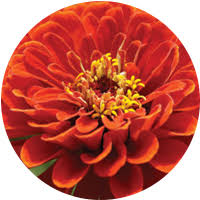 Flowers Colors Meanings - flower color meanings u0026 symbolism proflowers blog