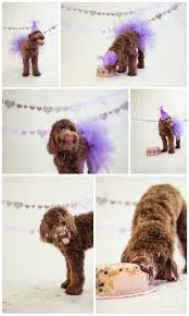 Cute Dog Products by Best 25 Dog Birthday Parties Ideas On Pinterest Puppy Party