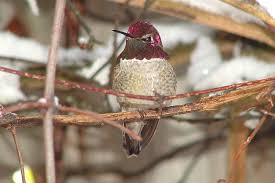 Hummingbird Tiny Houses by Hummingbirds In Winter Where Are They