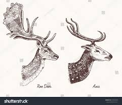 roe deer doe axis indian dotted stock vector 632792450 shutterstock