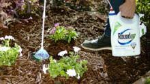 weed control solutions for flowerbeds u0026 vegetable gardens