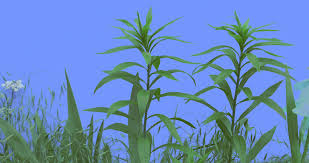 stalks of field grass wild small flowers plants on a lawn or
