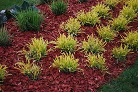 dyed mulch vs regular mulch using colored mulch in gardens
