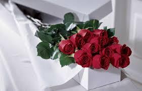 one dozen roses dozen boxed roses