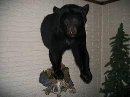 bear rug or half mount