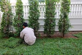 using small trees for landscaping advanced tree shrub care inc