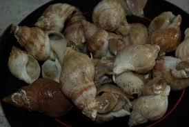cuisiner des bulots cuire des bulots et bigorneaux balade gourmande de cécile