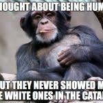 Chimp Meme - chimp meme generator imgflip