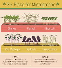 Benefits Of Urban Gardening - december 2015 u2013 yardfarmers