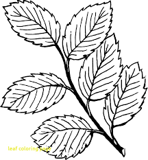 coloring pages of leaf shapes leaf coloring page coloringpageforkids co
