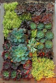 terrific succulent wall art better homes and gardens full size of