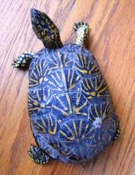 150 best tortugas images on el sea turtles and