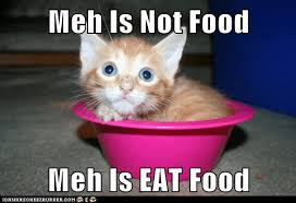 Meh Meme - meh is not food meh is eat food lolcats lol cat memes funny