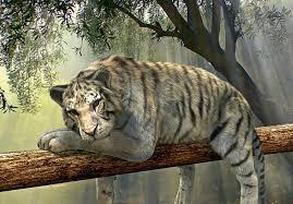 tiger jungle free photo on pixabay