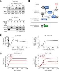 dynamic control of hsf1 during heat shock by a chaperone switch