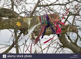 collection of colourful pieces of cloth to a tree to