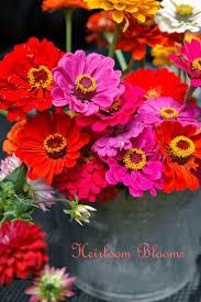 Zenith Home And Garden Decor 198 Best Zinnias Images On Pinterest Zinnias Flower Gardening