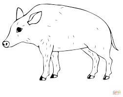 wild pig coloring page free printable coloring pages