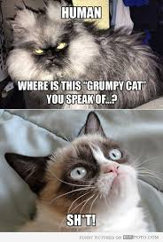 Colonel Meow Memes - where is the grumpy cat scary cat colonel meow asking colonel