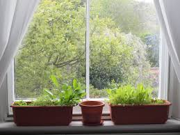 Window Sill Herb Garden by The 3 Best Herbs For Windowsill Gardens Because Even College
