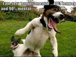 Hyper Dog Meme - 75 best groomer humor images on pinterest funny stuff funny