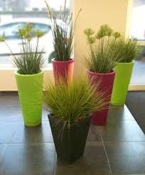 plantes bureau les plantes idéales pour rendre plus agréable un bureau